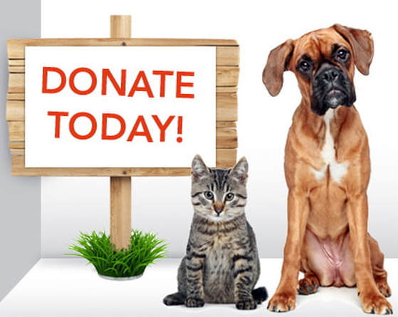 Picture of dogs and cat for adoption waiting for donation for non-profite
